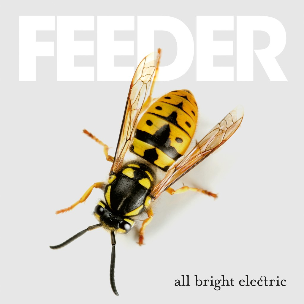 feeder-allbright