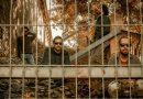 """Delbosque presentan su nuevo single, """"Las fuerzas"""""""